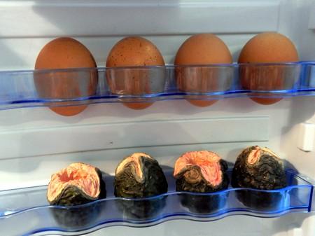 Кладка ксеноморфов в холодильнике