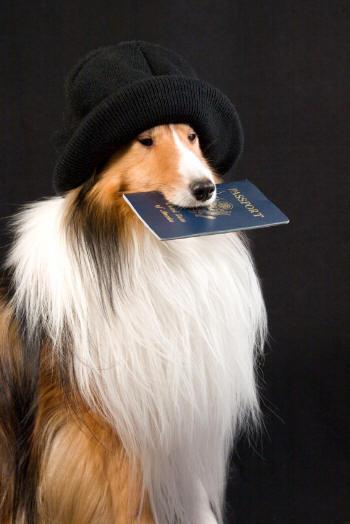 Регистрация домашних животных станет платной и обязательной